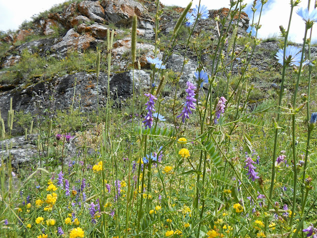 Цветы на фоне скалы у Зотинской пещеры