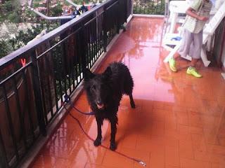 Αυτο το αξιαγαπητο θυληκο αδεσποτο σκυλακι βρεθηκε στο παρκο της Καντζας. Ειναι πολυ φιλικο εχει ενα κολαρο με καρφιά μαυρο.Το αναζητά καποιος?