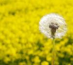 Δες ποιες τροφές καταπολεμούν τις αλλεργίες