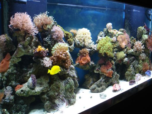 Saltwater Aquarium Fish Types Aquatic Gardens