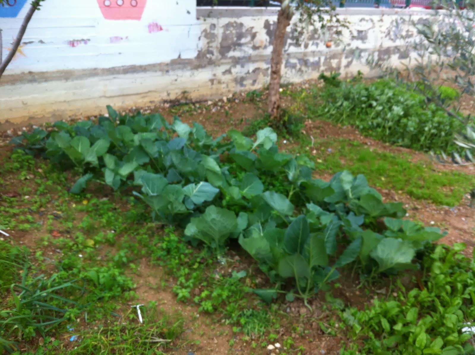 Ο λαχανόκηπος μας