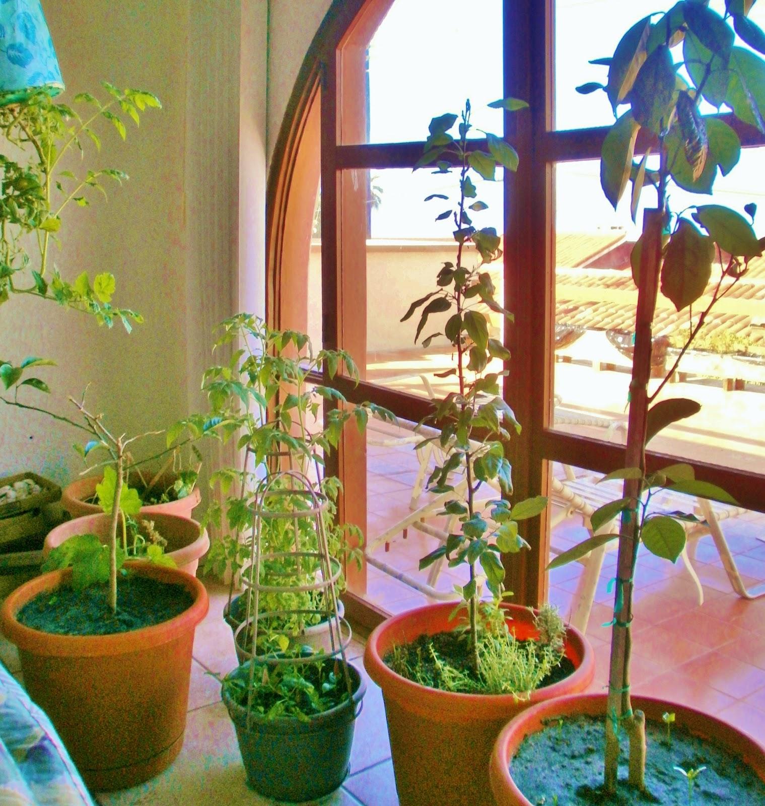 Twinas 39 family magazine growing avocados garlic herbs for Indoor gardening pdf