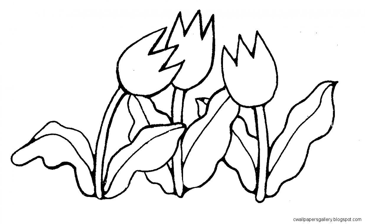 Mormon Share  Tulips