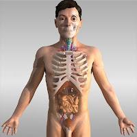 3d Human Anatomy8