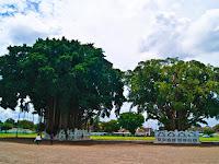 Pohon yang Dipercaya Sebagai Tempat Tinggal Hantu