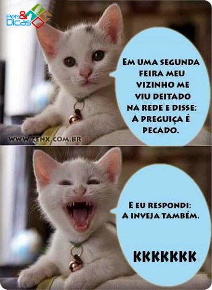 Imagens de piadas de gato para publicar Facebook