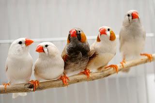 صور طيور في غاية الجمال