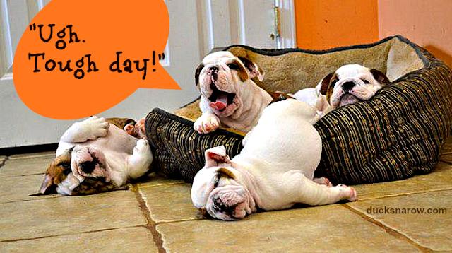 holidays, puppies