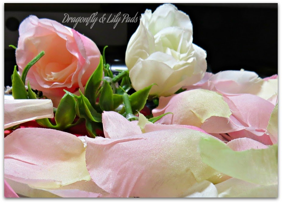 Silk Roses, Pink, Ivory, Cutting Petals, He Loves Me, He Loves Me Not