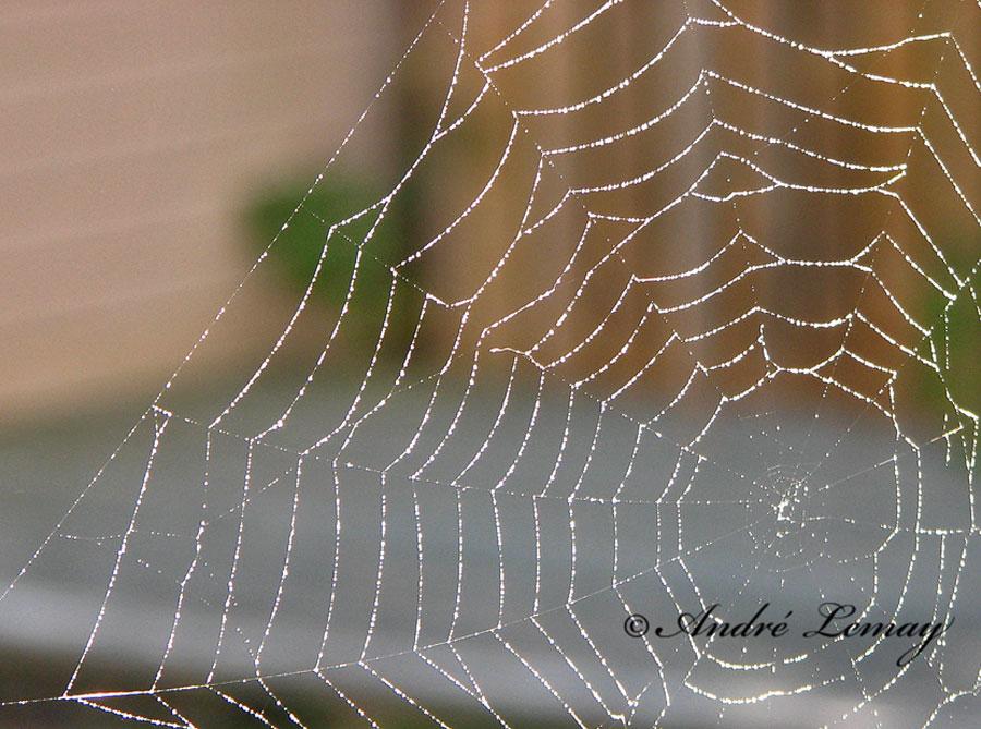 anico spider web toile d araignee