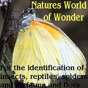 NATURES WORLD of WONDER
