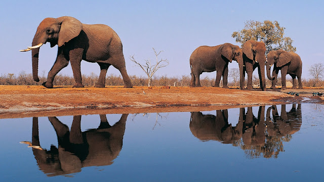 18291-Wild Elephants Animal HD Wallpaperz
