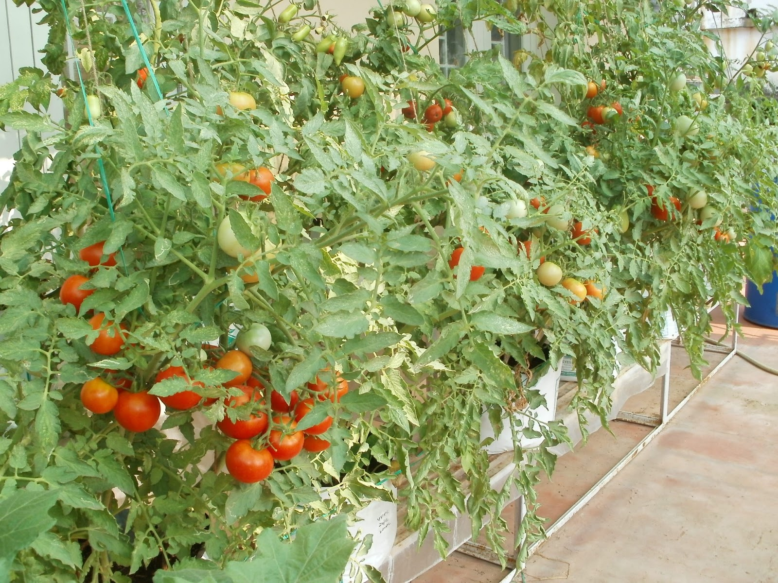 terrace vegetable garden