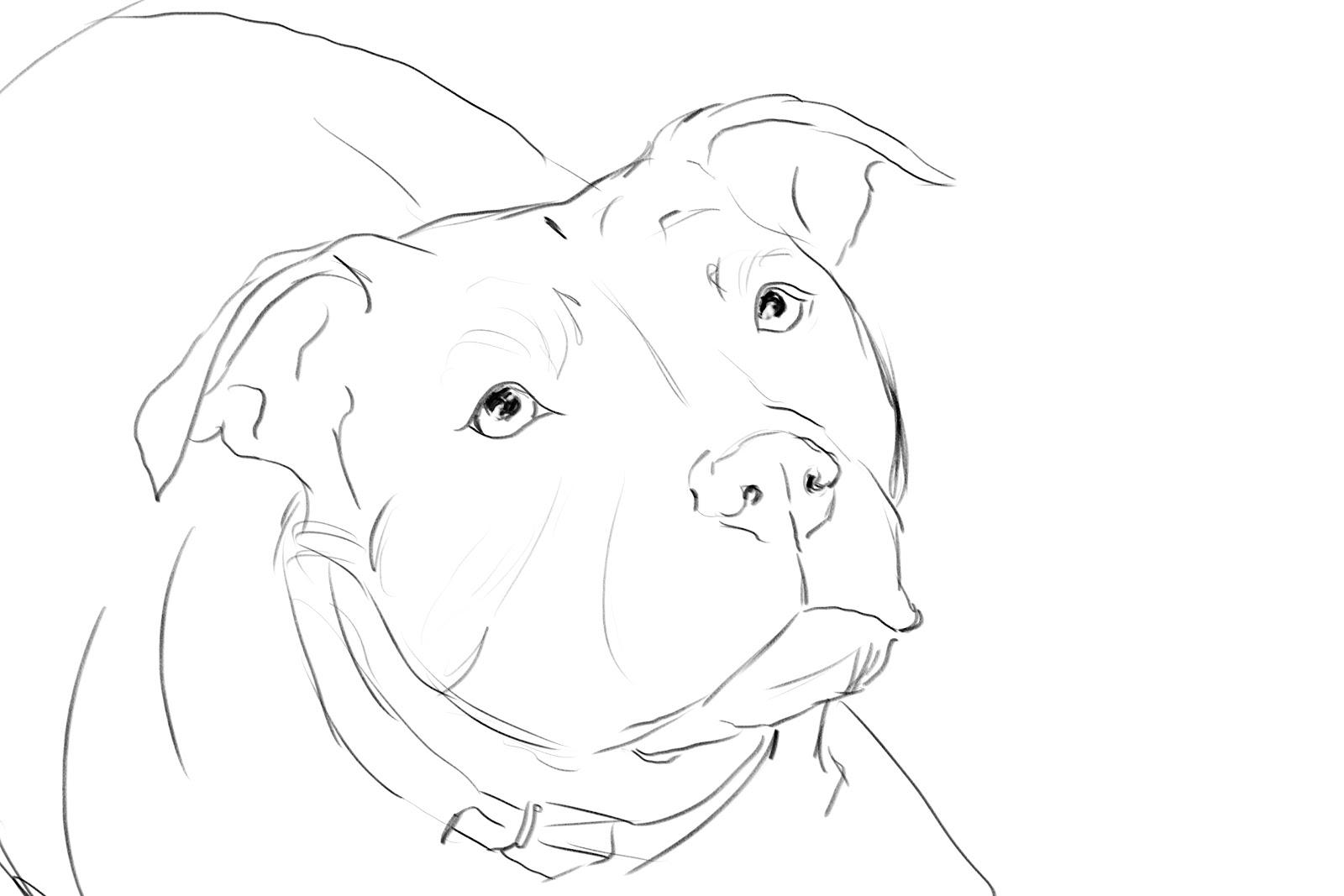 Anatamation: where Anatomy meets Animation: Dog anatomy