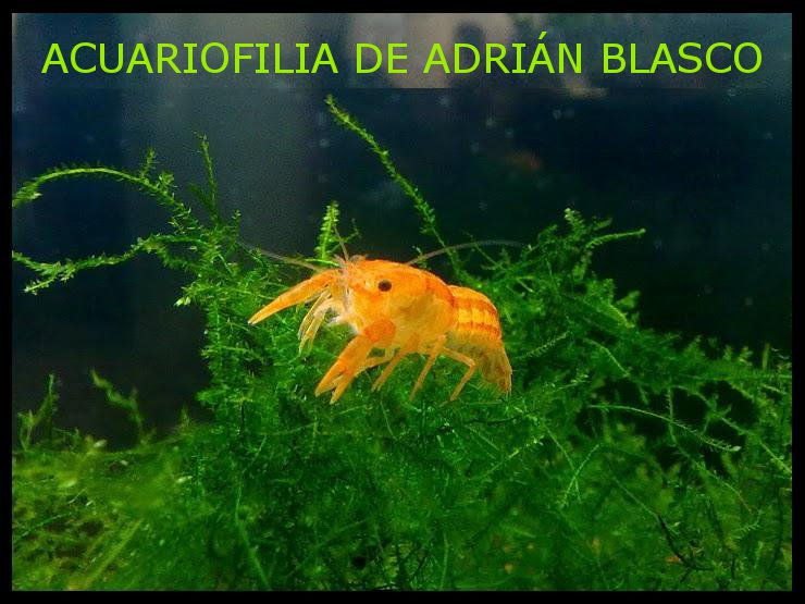 ACUARIOFILIA  DE  ADRIÁN  BLASCO