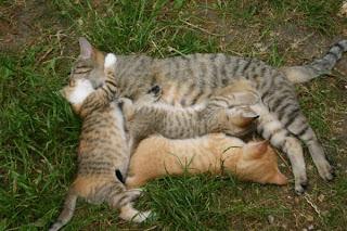 Les chats quelle passion - A quel age couper les griffes d un chaton ...