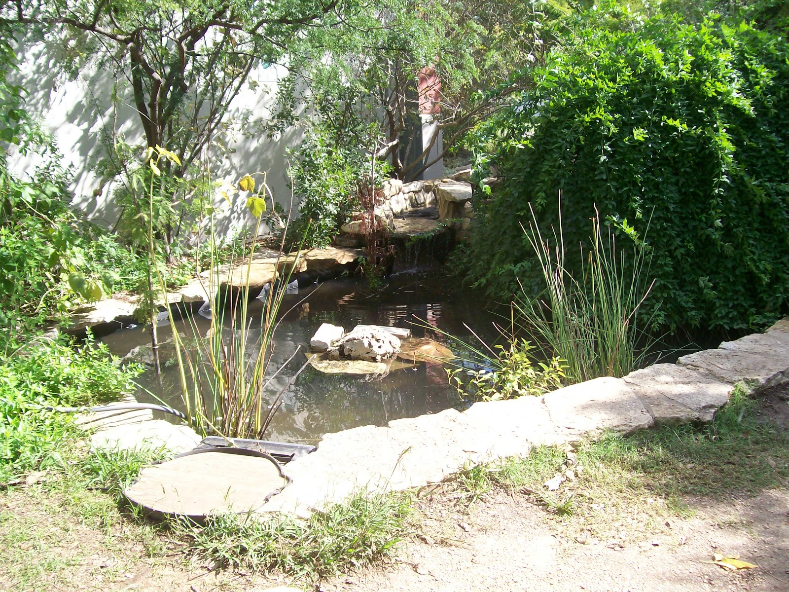 In small gardens plant sale new garden and pond help for Small garden ponds for sale
