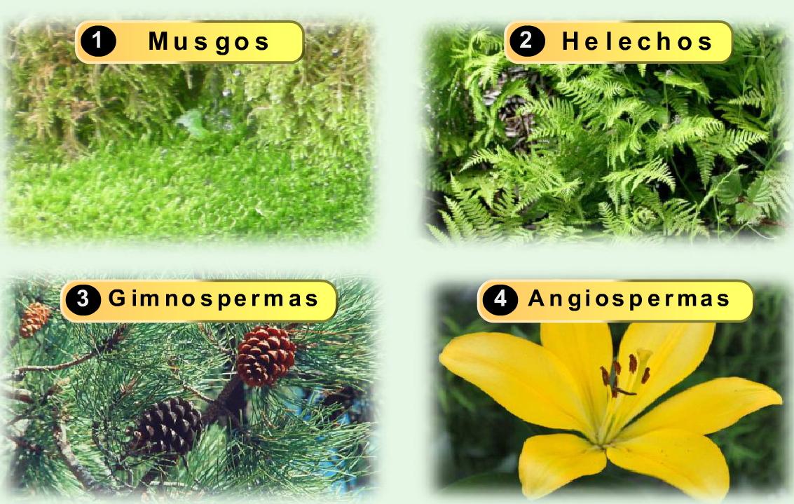 Maestro san blas clasificaci n de las plantas for Que se planta en septiembre