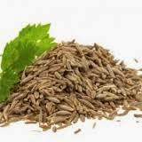 Free Agri Tips, free agri calls,maize trading ,jeera trading