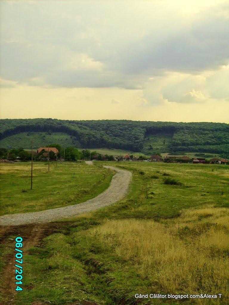 """Zona Betfia ( Avenul Betfia sau Huda Bradii este situat în versantul de sud-vest al Dealului Şomleu - 346 m; """" sat în comuna Sînmartin, județul Bihor, România. Învecinat cu Băile Felix."""" wikipedia)"""