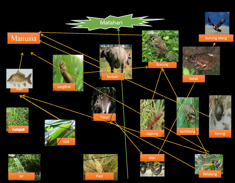 Ekosistem Sawah Bertingkat 6c Makalah Laporan Praktikum Lapangan