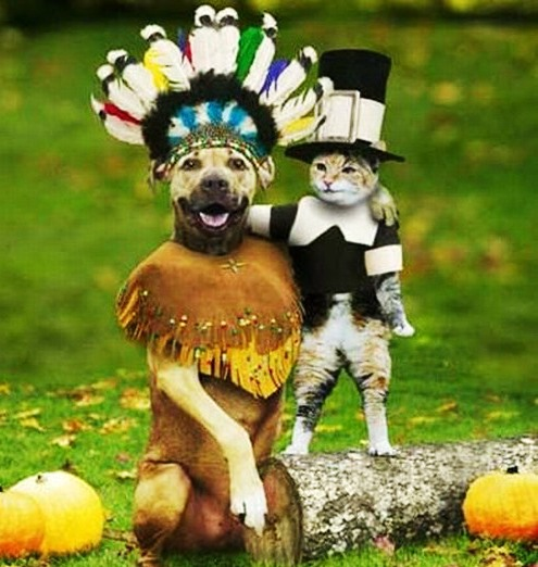 funny dogs and cats image dog and cat friendship share