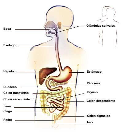Aparato Digestivo: Aparato Digestivo