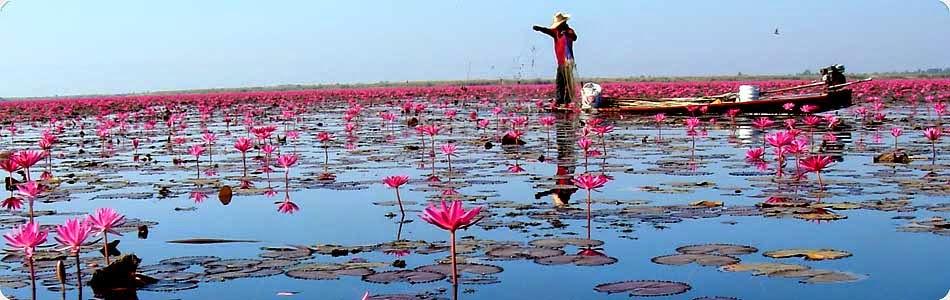 Le lac aux lotus roses d'Udon Thani