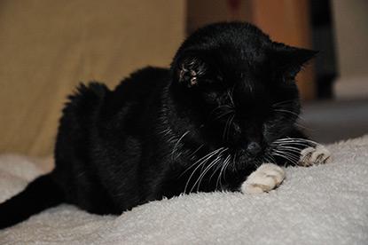 Elderly cat Jess