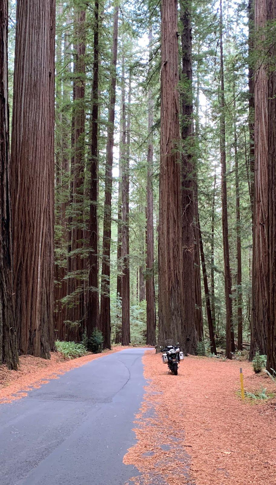 Backdoor to the Redwoods