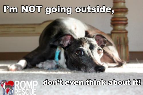 dog cancer survival guide pdf download