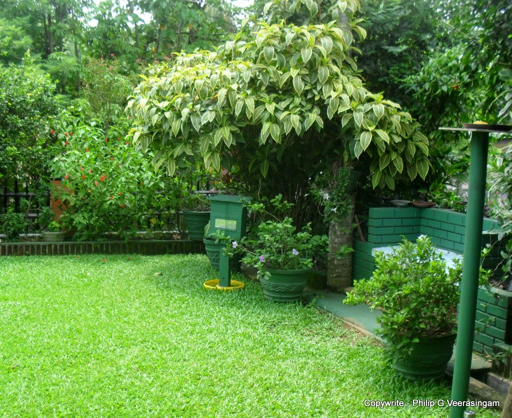 Philipveerasingam pictures from a home garden in for Home landscape design sri lanka