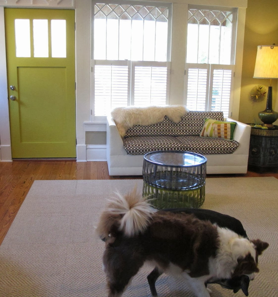 Dog Biting Rugs: Christie Chase: #373...i Put A Rug On It