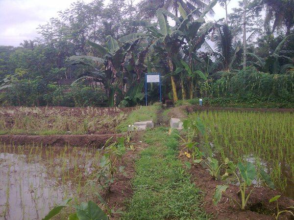 Sawah Banjarnegara