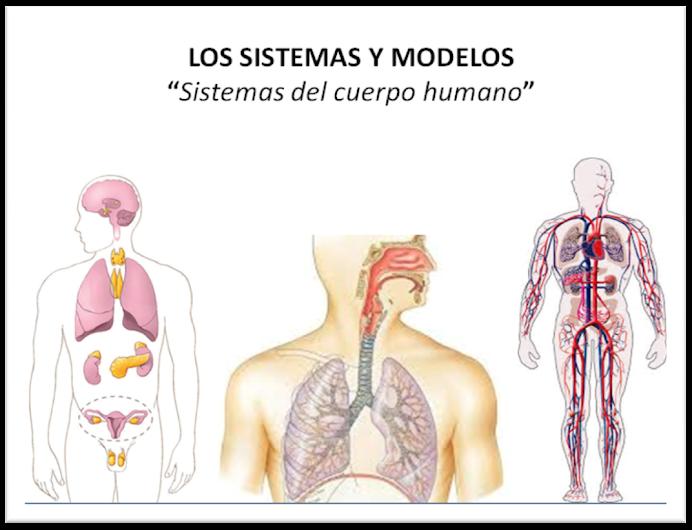 Sistemas y Modelos: el CUERPO HUMANO