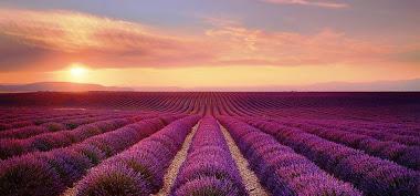 França / Região do cultivo