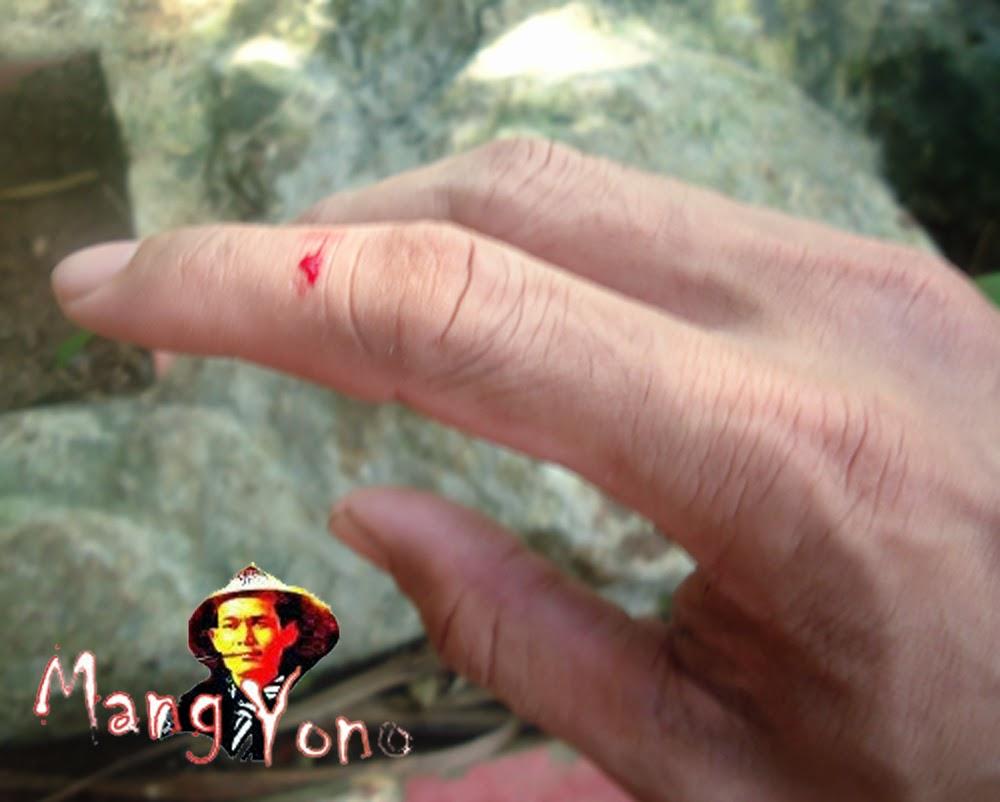 Cara mengobati luka, kutil dengan getah Adenium Obesum