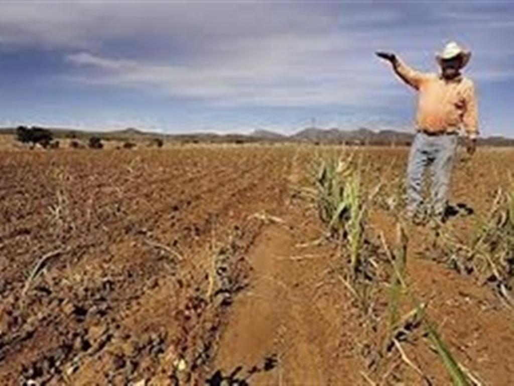 el campo tamaulipeco en crisis peri211dico frontera de