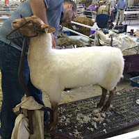 The Big E Sheep Shearing New England Fall Events