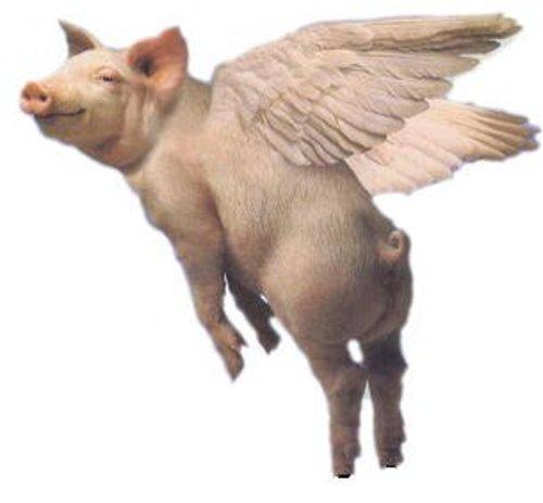 http://3.bp.blogspot.com/-elUzoLwX3_M/TcCLPwmFU3I/AAAAAAAAEZI/e8W5BzeiS_E/s1600/pigs_fly.jpg