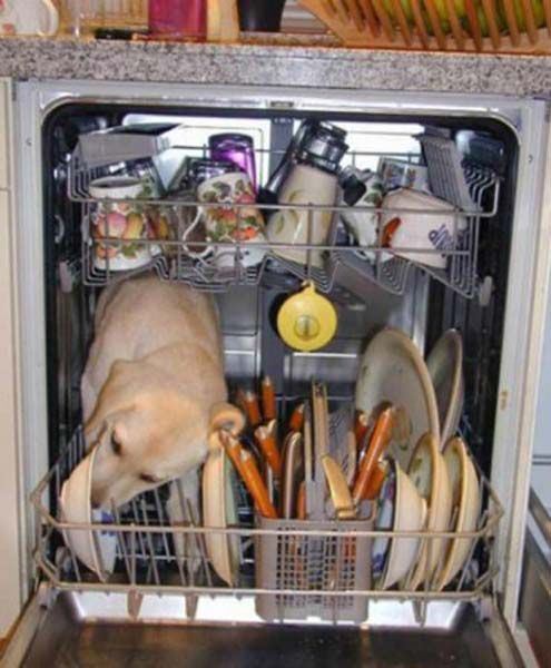 Dog in the dishwasher