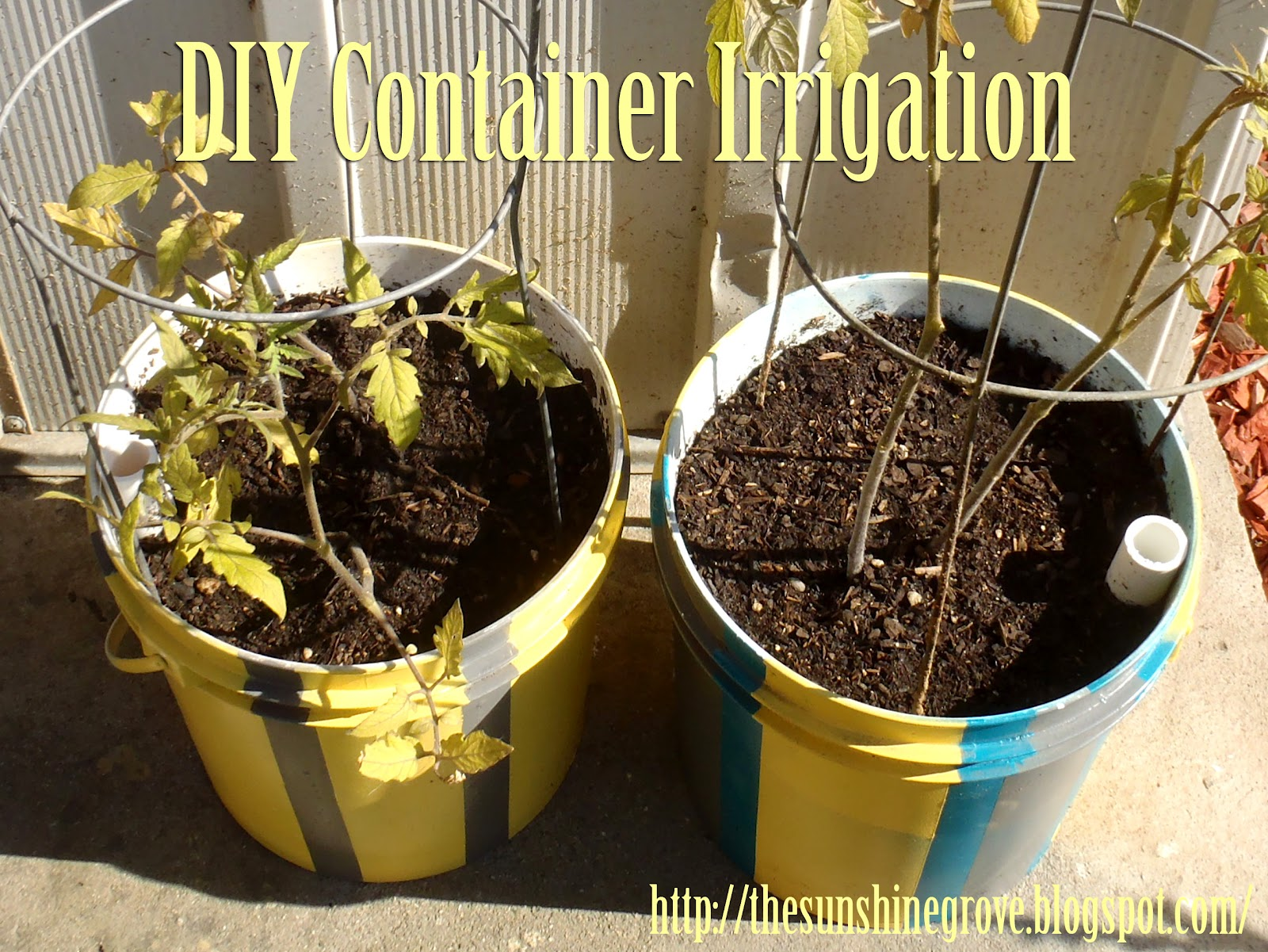 The Sunshine Grove: DIY Container Irrigation System