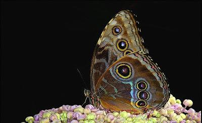 Fluture viu colorat