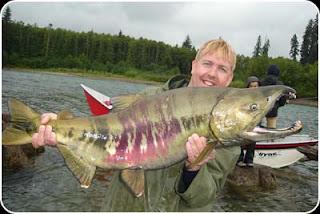 Big fishes of the world salmon chum oncorhynchus keta for Alaska freshwater fish