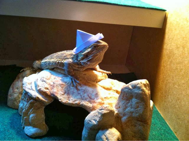 Funny animals of the week - 22 November 2013 (35 pics), lizard wears tiny paper hat
