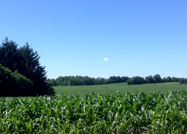corn fields and blue sky around Ottawa