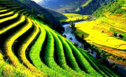 Ruộng bậc thang Việt Nam