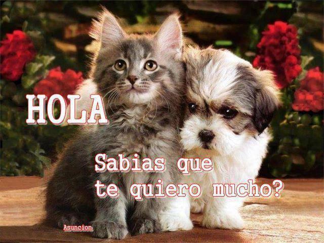 Gato y perro: te quiero mucho