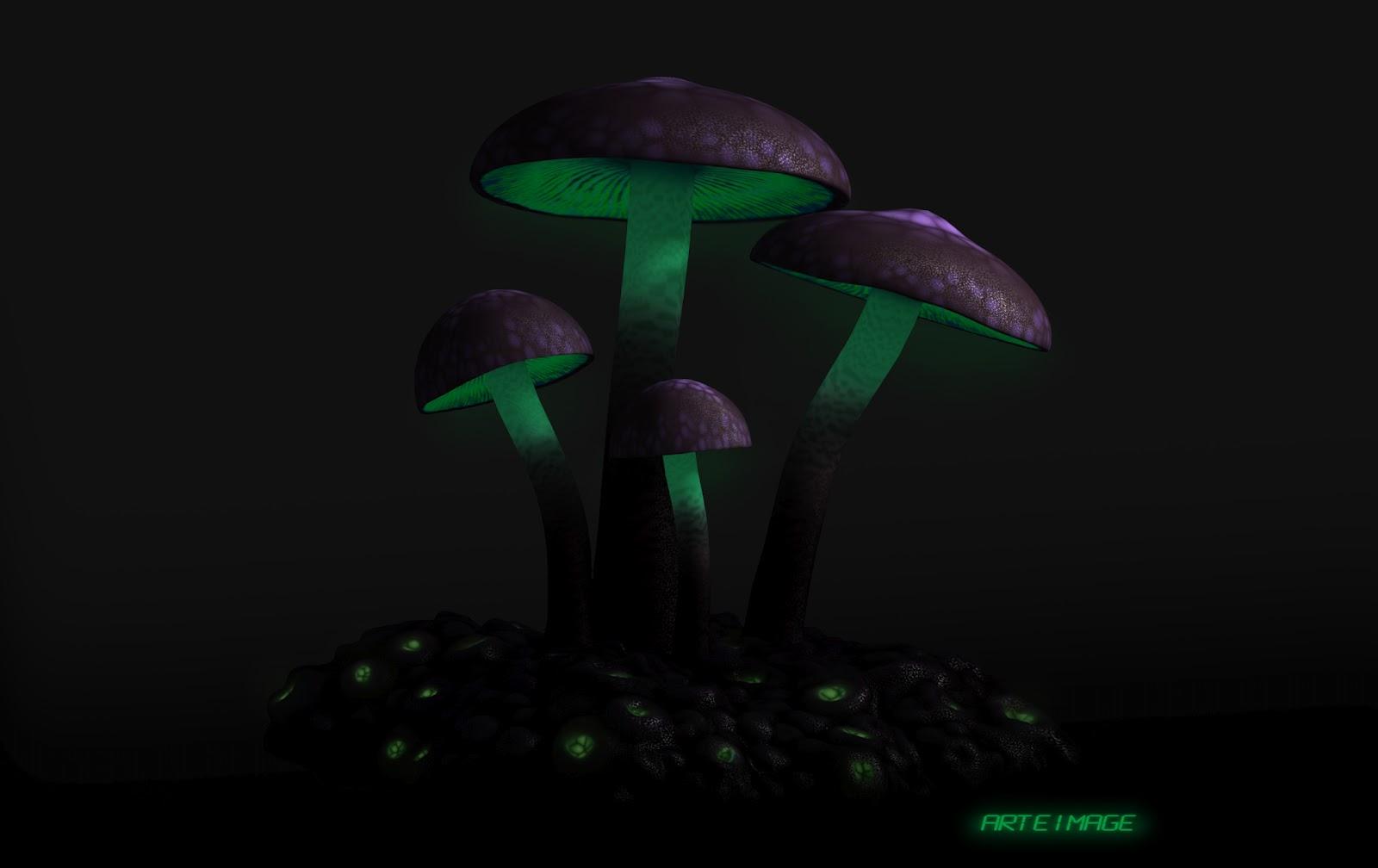 funghi2.jpg