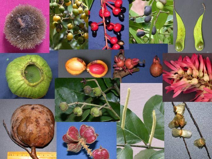 Plant diversity essay contest